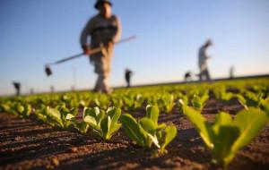 Infortuni, il maggior calo è in agricoltura