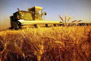 Lavoro, in agricoltura cresce di più (+2,9%)