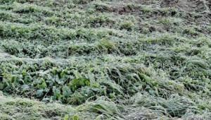 Maltempo, allarme gelo per verdure e ortaggi