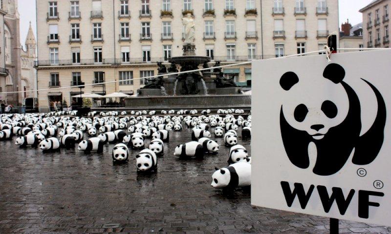 Il WWF compie 60 anni