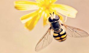 Giornata mondiale delle api: l'importanza di questi insetti per la salute del nostro pianeta