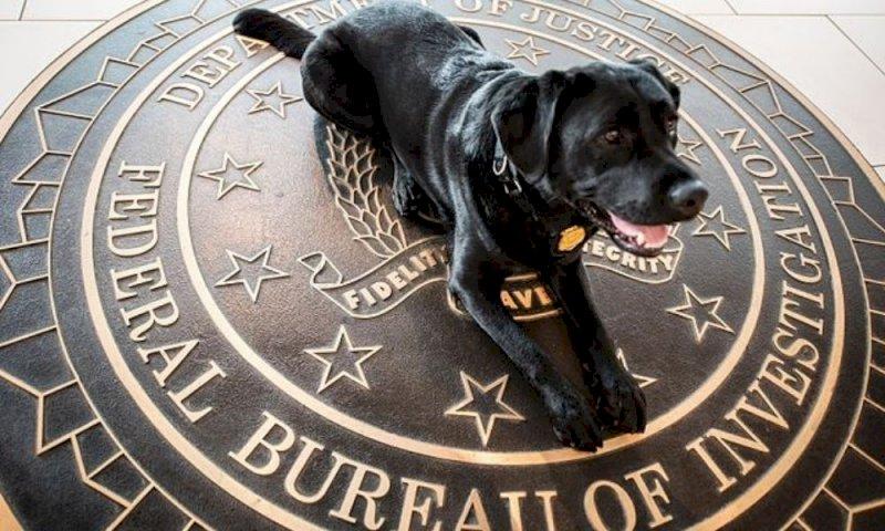 App creata dall'FBI veniva utilizzata da criminali di tutto il mondo: raffica di arresti