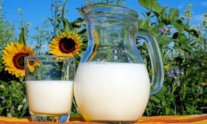 I produttori italiani di latte rischiano il collasso e lanciano l'allarme: le stalle stanno chiudendo